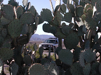 Our Subaru Framed by Prickly Pear